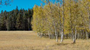 Amazing Autumn Areas in Arizona
